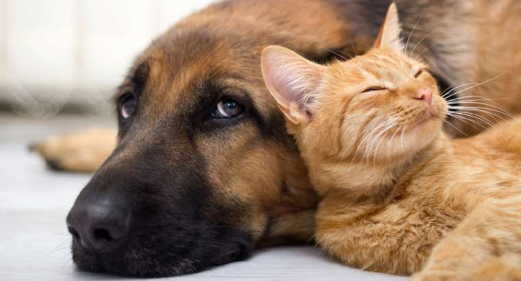Pet Stain and Odor Removal St Paul Park St Cloud Egan